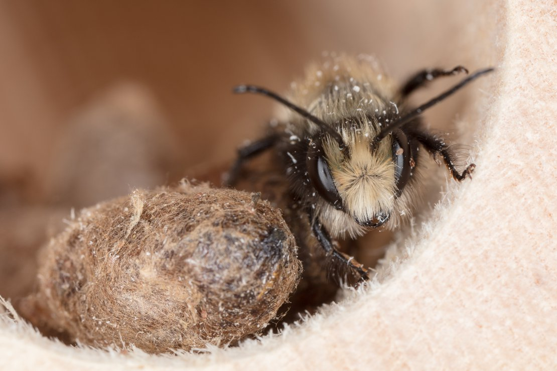 Mason Bee Waiting...