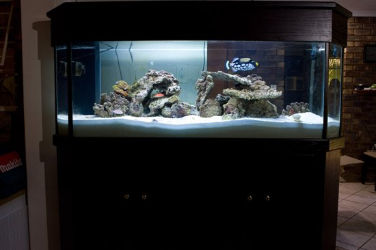 180g Mixed Reef Aquarium